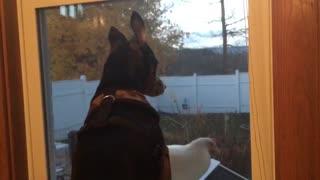 Snoopy & Della, the hen