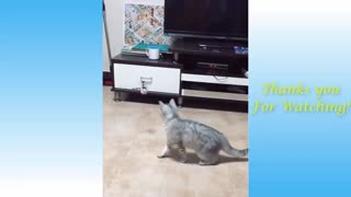 Amazing Pets and funny creature
