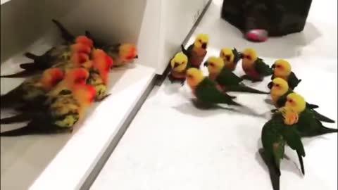 Bird on bird gang violence
