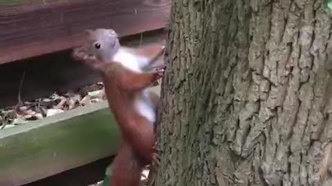 Hey guy, do you need nuts?