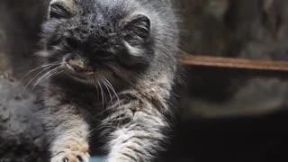 Majestic Cat 😸