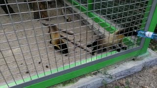 Dangerous animals in the zoo.