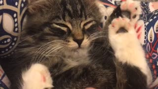 Precious cuddles with new foster kitten