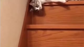 Cat steps down