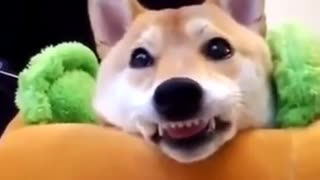 Animal funny video viral video