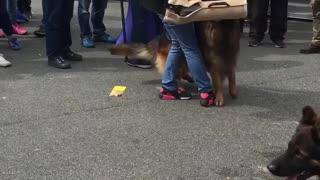 German Shepherd attacking 😱😱