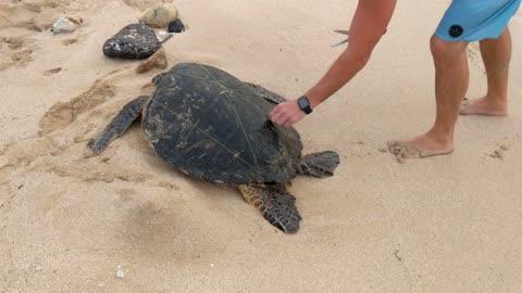 Turtle rescue**