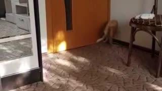Filya's kitten plays with a Sunny Bunny
