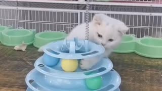 Cute kitten - Funniest compil