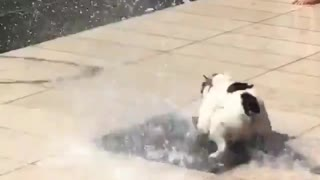 Playful Dog Playing with water!