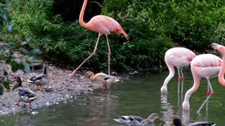 pink animal bird amazing video full HD new 2021