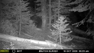 Night Bear 2