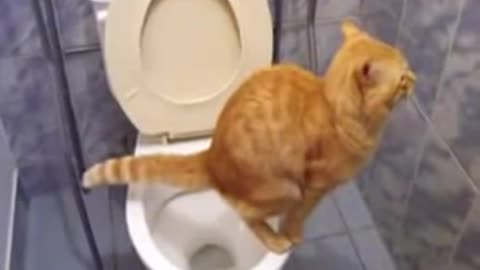 Cat pees in the Toilet