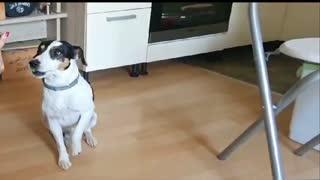 Raspjevani pas Totti ima poprilično glazbenog talenta
