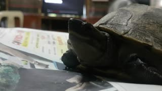 The Timid Tortoise - A Timelapse Video