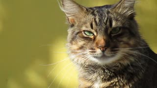 Cat - Best View - Free Review - Wow nice shot Tabby Cat