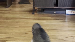 Zooming Cat Falls Through Window Screen