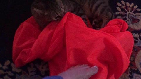 Our Little Man Dexter is a Crazy Cat