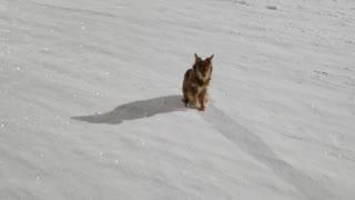 A small dog walks at night.
