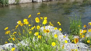 river flowers and butterflies