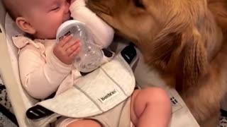 family friendly dog