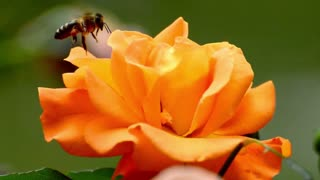 Amazing Flowers in Bloom
