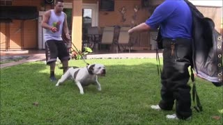 How To Make Dog Become Very Aggressive With Few Tricks.