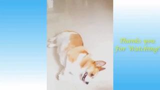 Acting Dog