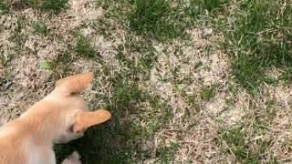 Puppy morty digging