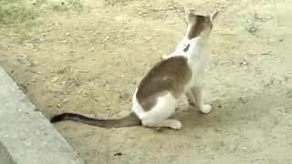 Monkey and cat catching fun
