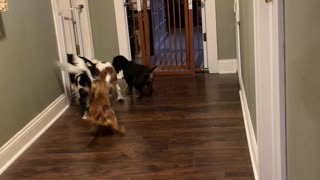 Dogs excited about nap time