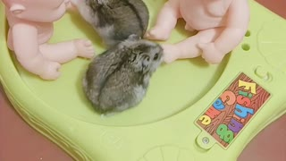 KiKi and MiuMiu play dolls together...