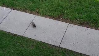 Feedin squirrel