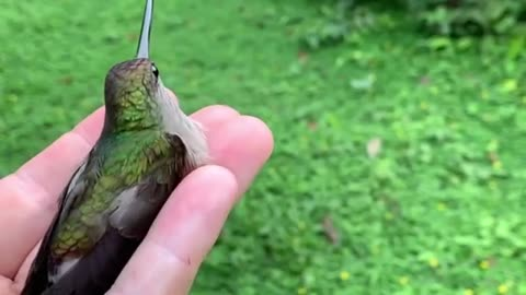 A wonderful view of hummingbirds in the hands of their owner