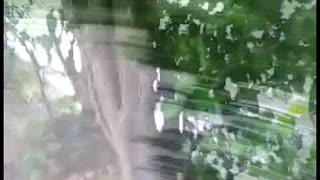 Conductor de bus fue agredido a piedra en Bucaramanga