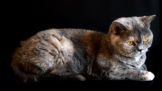 Lovely cat 00