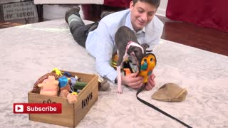 3 Ways to Get your Dog Playing!, It works