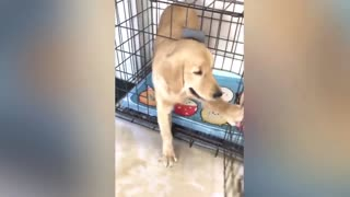 Funny Dog Cake Reaction Compilation