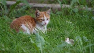wonderful cat 🐈