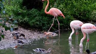 Flamingo very cute