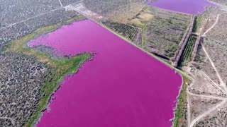 Argentina lagoon turns bright pink due to pollution