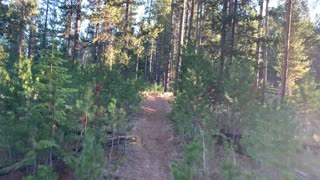 """Central Oregon – Paulina Lake """"Grand Loop"""" – Who DOESN'T Have Favorite Species of Trees? – 4K"""