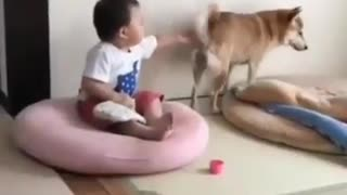 See what the kid is doing on this dog hahaha