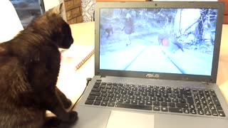 Cat doesn't understand how computers work