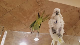 Beautiful parrots are enjoying together