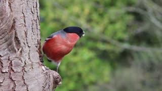 Beautiful Bird 02