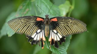 Butterfly Color Nature Fly Animal 🌴🌴🌴🌴