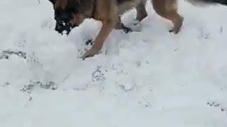 Dog's joy