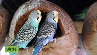 Watch how love is for birds