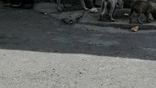 happy little dogs